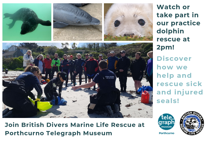 Combination of colour photographs showing seals in their natural habitat and mammal medics from the British Divers Marine Life Rescue demonstrating a dolphin rescue as part of their work as a maritime wildlife conservation and rescue charity, with text that reads watch our practice dolphin rescue at 2pm, Tuesday 30 July 2019 at the Telegraph Museum Porthcurno.