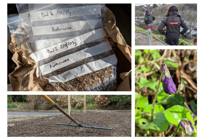 Multiple photo image showing four photographs showing bags of seeds, raking soil, wild violet plants in flower and staff from the Telegraph museum Porthcurno and the Eden Project, in promotion of wildflower planting and rewilding as part of Planet PK.