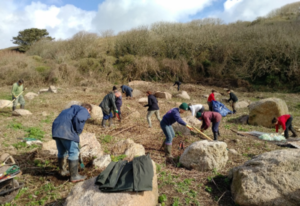 Colour photograph showing group of volunteers and staff from the Telegraph Museum Porthcurno and the National Trust have teamed up as part of The National Trusts Land, Outdoors and Nature Strategy, managing invasive species, with a volunteer day on 21st February 2020.